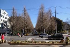 ベンチ撤去後の駅前花壇が完成し披露、銀杏並木をバックに日吉の新名所に