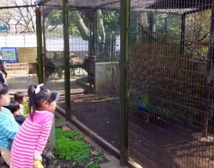 鳥インフルが影響、日吉駅から近い夢見ヶ崎の「春の動物園まつり」が中止に