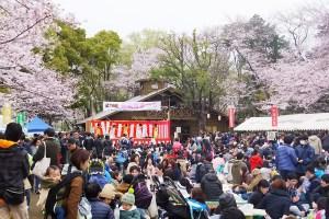 2017年の「綱島公園桜まつり」、雨天予報のため4月2日(日)に順延