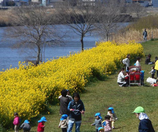 <コラム流域思考>春爛漫の綱島・鶴見川~憩いの場となった川辺は地域の誇り