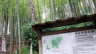 続日本100名城に選ばれた「小机城」、6/3(土)に歩いて紙芝居も楽しむツアー