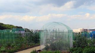 市が農地を買い取り新吉田東に「農地付き公園」計画、緑地保全の一環で
