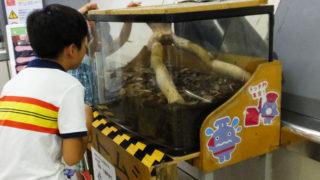 日吉駅生まれの「かぶと虫」今年は早めの誕生、展示も早めに終了か
