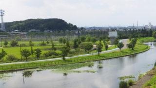 新横浜公園でコスモスなどの「花の摘み取り体験」、10/15(土)から4日間
