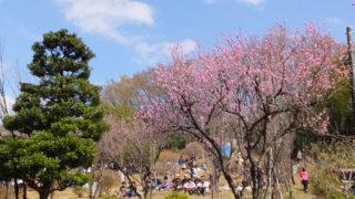 """「綱島の桃」復活の""""恩師""""に育て方を学ぶ、3/28(水)午後に市民の森で散策会も"""