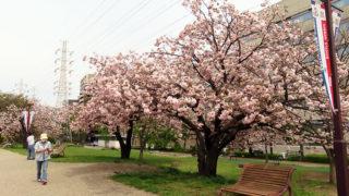 新横浜の今と昔を歩く春のツアー、港北ボランティアガイドが3/31(土)午前に