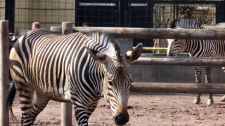 <夢見ヶ崎動物公園>2年ぶりの「春の動物園まつり」は3/25(日)10時から